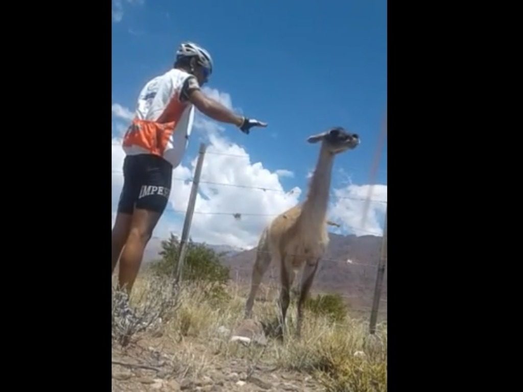 https://elsol-compress-release.s3-accelerate.amazonaws.com/images/large/1516961061885ciclista%20y%20guanaco.jpg