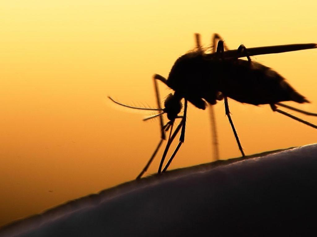 https://elsol-compress-release.s3-accelerate.amazonaws.com/images/large/15580298951745c435bfa47fa7_dengue-mosquito.jpg