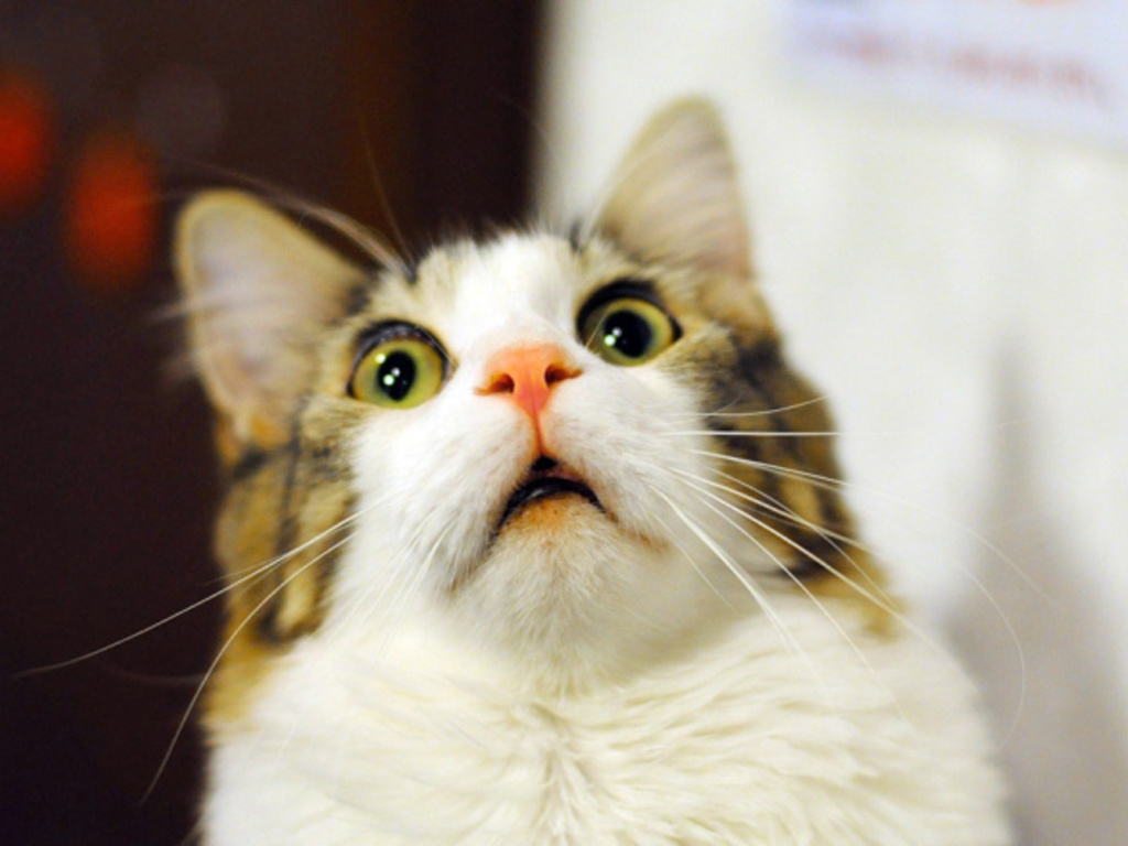 https://elsol-compress-release.s3-accelerate.amazonaws.com/images/large/1560253022451scared-surprised-cat-face.jpg