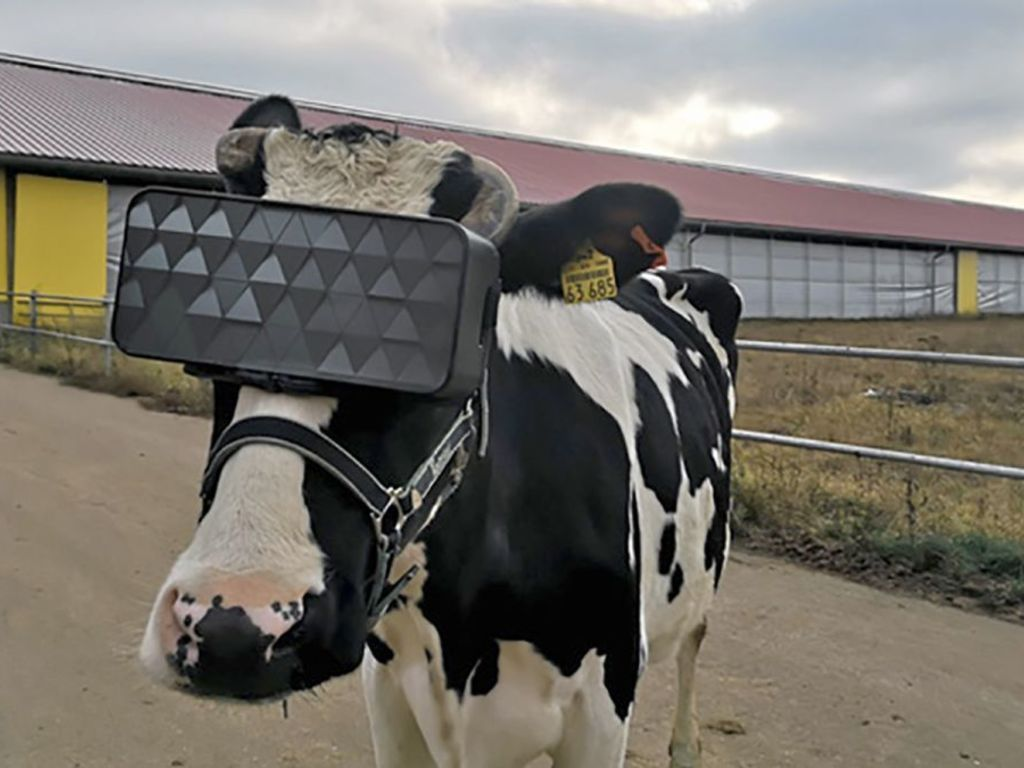 https://elsol-compress-release.s3-accelerate.amazonaws.com/images/large/1574940049821vacas%20VR%20headset.jpg