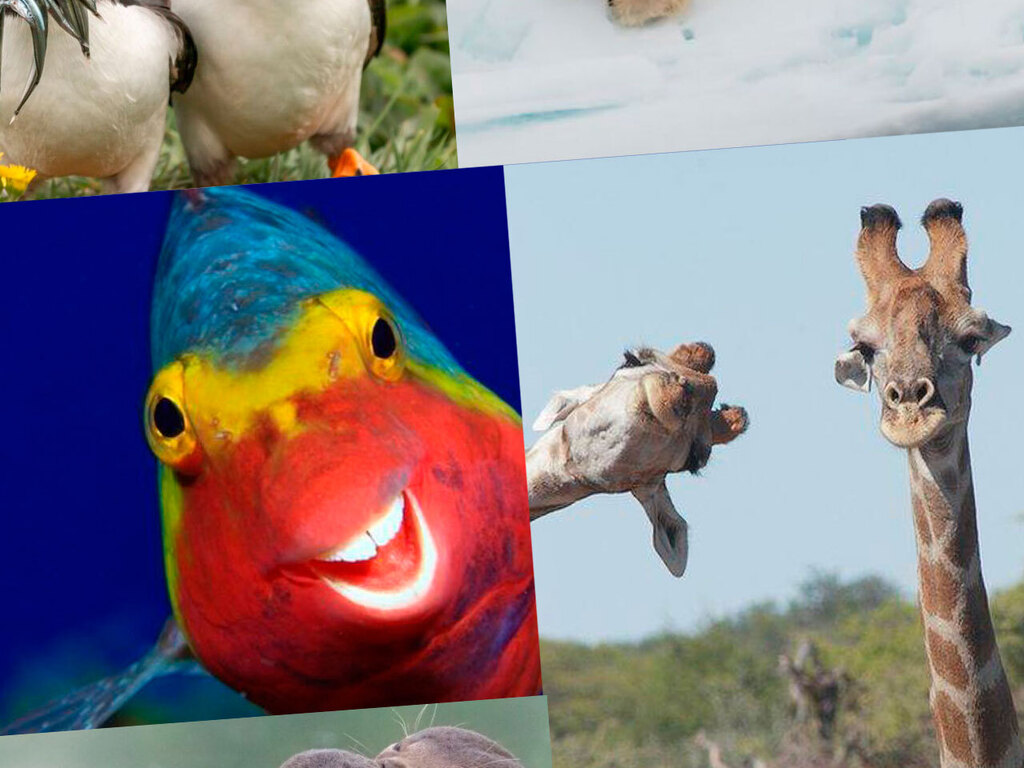https://elsol-compress-release.s3-accelerate.amazonaws.com/images/large/1600176749259Comedy-Wildlife.jpg